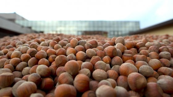 Potenza, prodotti Ferrero realizzati con le nocciole lucane