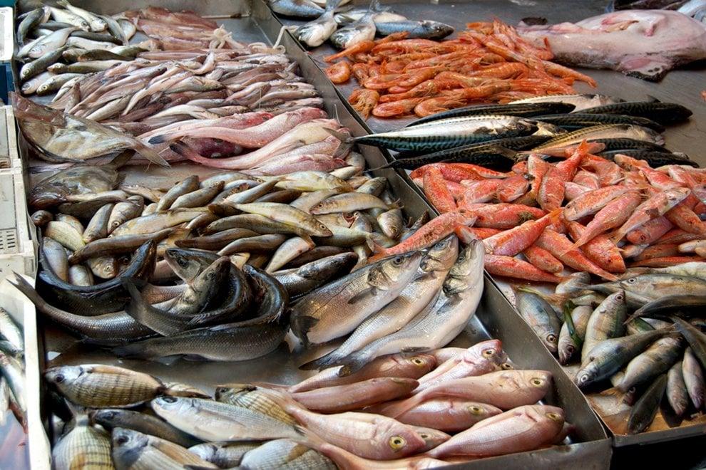 Itticheria, il primo fish point con i pescati di gola