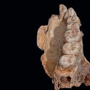 Scienza, un software ricostruisce la dieta degli antichi dallo studio dei denti
