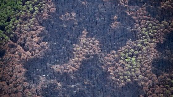 Incendi: sul Vesuvio 50% superficie a fuoco,distrutte pinete