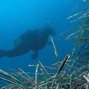 Ambiente, alghe aliene nel Mediterraneo: scoperto il meccanismo diffusione
