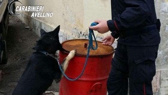 Avellino: il fiuto del cane antidroga Greco fa arrestare un pusher minorenne