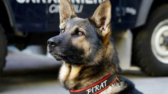 Blitz nel centro di accoglienza, il cane Pirat fa scoprire la droga nascosta nella schiuma da barba
