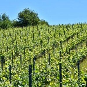 Pedalando fra le vigne del Sannio per degustare vini prodotti da agricoltura sostenibile