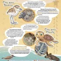 Castelvolturno, ecco la spiaggia che protegge tartarughe e uccelli