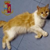 Gattina abbandonata sulla tangenziale di Napoli, diventa la mascotte della polizia