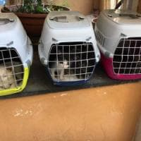 Gatti in fila per sei col resto di due