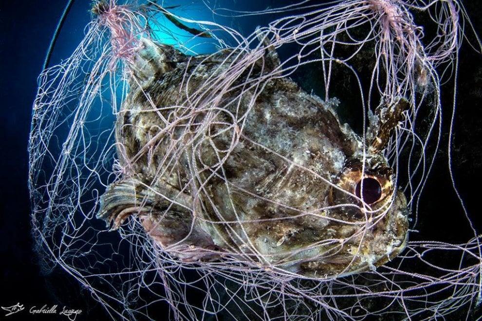 Ischia, l'agonia dello scorfano in uno scatto