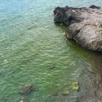 """Camerota, lo """"strano caso"""" del mare verde: """"E' la fioritura delle alghe"""""""