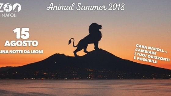 """""""Una notte da leoni"""", lo zoo di Napoli aperto di sera a Ferragosto"""