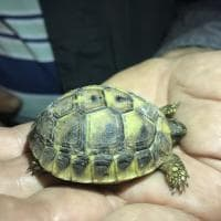 Cilento, trovate tartarughe nel borgo