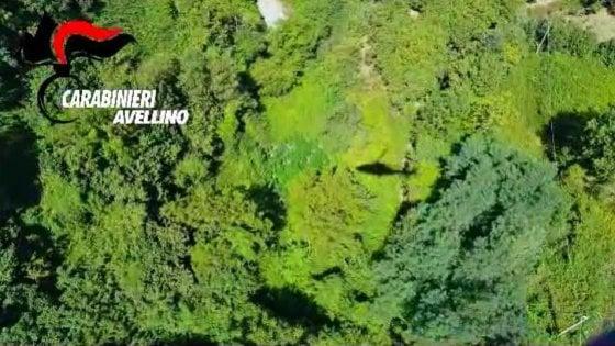 Blitz con l'elicottero, sequestrate piante di canapa sui monti dell'Irpinia