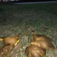 Insolito fenomeno a Castellammare, spuntano i funghi nella villa comunale