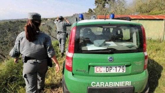 Avellino, blitz carabinieri forestali: inquinamento ambientale e maltrattamento di animali in irpinia