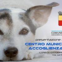 Napoli, apre il primo centro di accoglienza cani:
