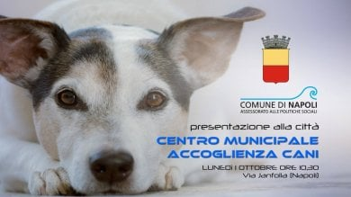 """Apre il primo centro di accoglienza cani: """"Non chiamatelo canile"""""""