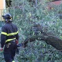 Vento forte: albero cade su un'auto vicino a un liceo del Vomero
