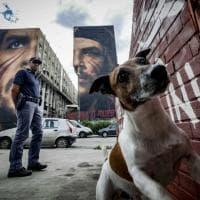 Operazione della Polizia nella periferia Est di Napoli, in azione anche Pocho il cane antidroga