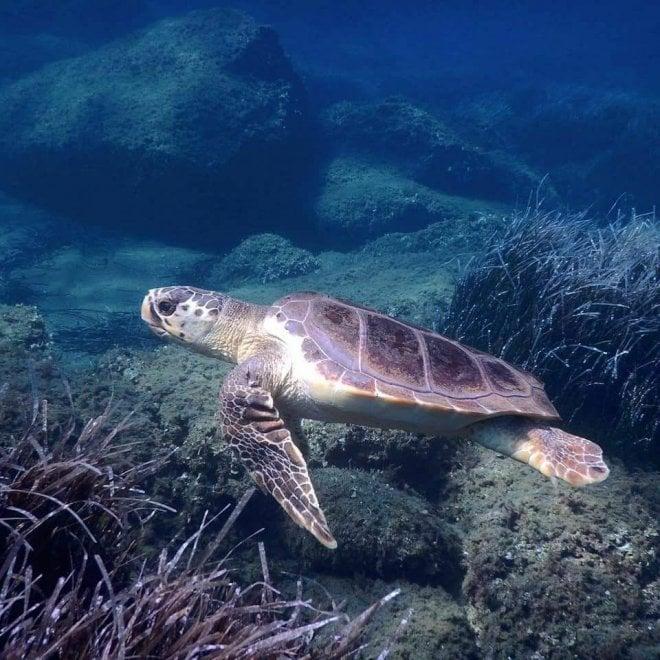 Dal centro di Portici al mare di Ventotene, la seconda vita delle tartarughe Yoda, Tartina e Giorgia