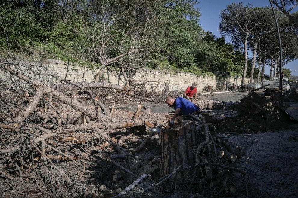 """Virgiliano, strage di pini: oltre cento saranno abbattuti. L'ira dei residenti: """"Incuria del Comune"""""""
