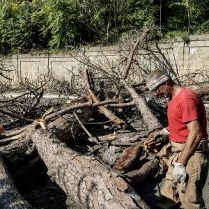 """I pini di Posillipo, l'agronomo: """"Moriranno tutti entro tre anni"""""""