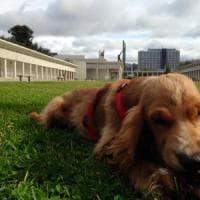 Mostra d'Oltremare, un'area di 3000 metri quadri per i cani