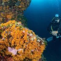 Ischia Clean Blitz, sub e pescherecci per ripulire i fondali marini dell'isola