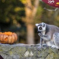 Halloween allo Zoo di Napoli dal 31 ottobre al 4 novembre