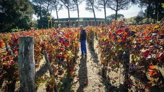 Pompei: ecco il vino rosso che si beveva duemila anni fa