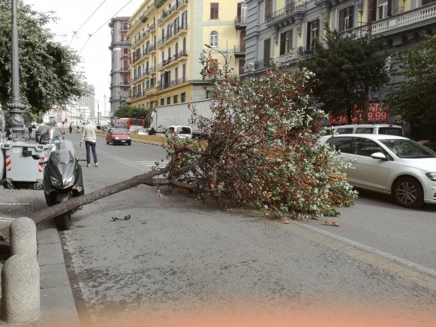 Vento forte, cade un albero al Rettifilo, illeso uomo a bordo di uno scooter