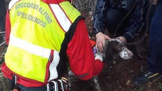 Capri, la favola del cane da caccia: cade in un dirupo, salvato dal soccorso alpino