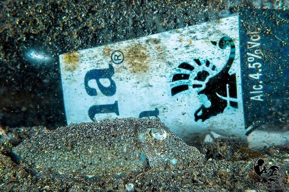 Costiera, la foto della seppia tra i rifiuti