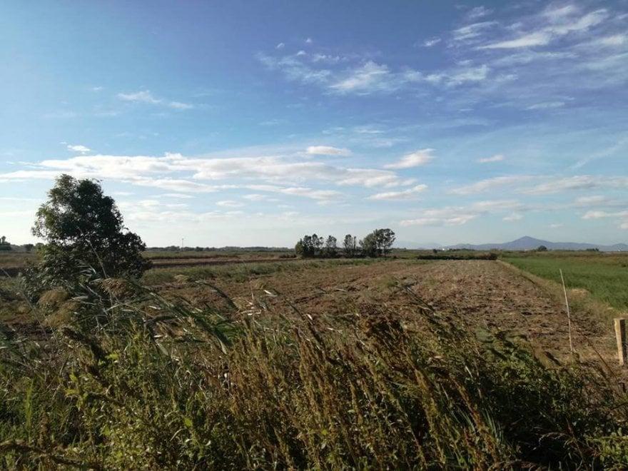 """Lago Patria, l'accusa degli ambientalisti:  """"Via la vegetazione, alterati gli ecosistemi"""""""