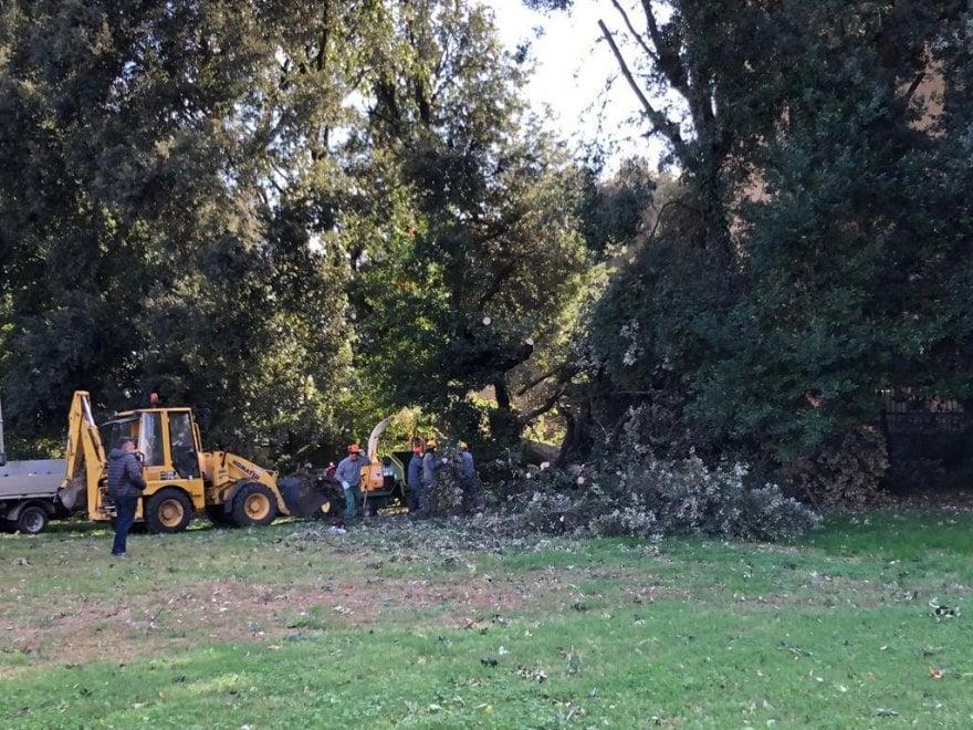 Maltempo: centinaia di alberi caduti nel Real Bosco di Capodimonte