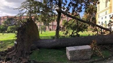 """Il Real Bosco di Capodimonte """"ferito"""": centinaia di alberi caduti per il maltempo"""