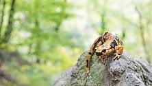 L'autunno le sfumature della salamandra pezzata