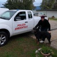 Cane sequestrato alla camorra, adottato da un'associazione