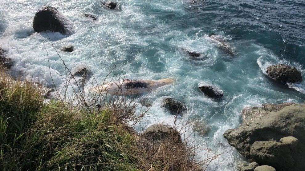 Ischia, capodoglio morto a riva: si indaga sulle cause