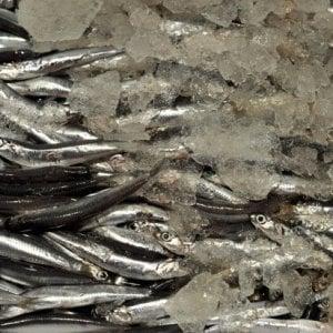 Napoli, niente scontrino nel 65 per cento delle pescherie