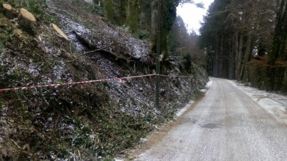 Alberi secolari abbattuti sul Faito, individuata la ditta responsabile del taglio