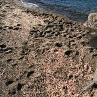I gamberetti morti sulla spiaggia di Ischia