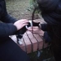 Una settimana in un tombino al Cardarelli, gattino salvato da una volontaria
