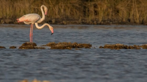 Dall'oasi dei Variconi al lago d'Averno, la Campania celebra la Giornata Mondiale delle zone umide