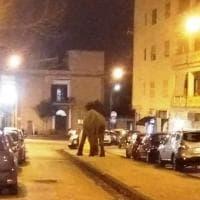 Elefante per strada a San Giorgio a Cremano. Zinno: