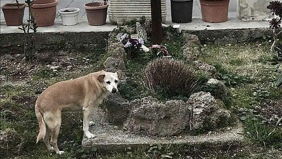 Nicoletta, la cagnolina che da 10 anni veglia la tomba del suo proprietario a Ischia