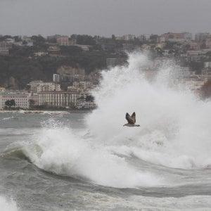 Maltempo, vento forte a Napoli: volano alberi e tettoie
