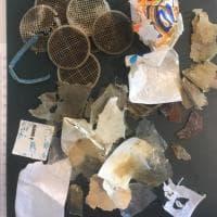 Cilento, ecco la plastica che ha ucciso una Caretta  Caretta