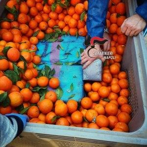 Pozzuoli: Una tonnellata e 200 chili di hashish nascosti sotto cipolle e arance: tre arresti