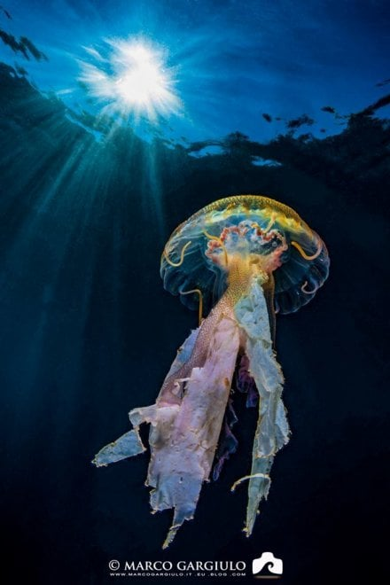 Massa Lubrense, lo scatto che fa riflettere: la medusa cattura la plastica