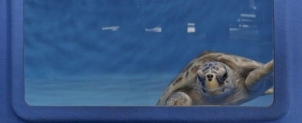 Portici, apre al pubblico il centro per curare le tartarughe marine